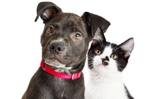 Voor verzekering hond kijk je bij Tinki.com